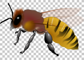 蜜蜂动画,大黄蜂,机翼,害虫,昆虫,传粉者,技术,绘图,无蜂蜜蜂,蜂