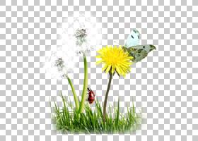 蝴蝶卡通,花卉设计,草,黛西,花,花卉,花盆,花瓣,向日葵,植物群,植