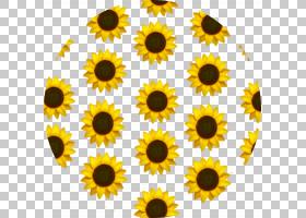 表情剪贴画,星形目,雏菊家庭,花粉,圆,植物,花,黄色,美学,太阳花