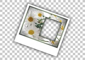 黄色背景框,相框,花,黄色,矩形,框架效应,阴影,巴尼亚卢卡证券交