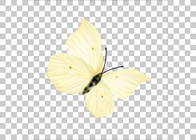黄花,刷脚蝴蝶,飞蛾与蝴蝶,昆虫,传粉者,花,花瓣,黄色,蝴蝶,粉虱