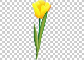 郁金香花,黄色,花瓣,叶,植物群,植物,花,植物茎,计算机图形学,郁