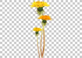 郁金香花,黛西,雏菊家庭,黄色,向日葵,植物群,花盆,食物,葵花籽,
