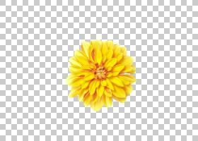 颜色背景,非洲菊,大丽花,金盏花,雏菊家庭,花瓣,向日葵,Gerber格
