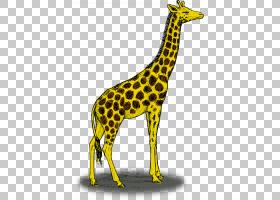 铅笔剪贴画,尾巴,黄色,野生动物,长颈鹿,颜色,绘画,南非长颈鹿,卡图片