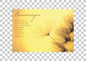 黄花,花瓣,花,黄色,瑞士法郎,信封,地图,增值税,文本,Grafik Werk图片