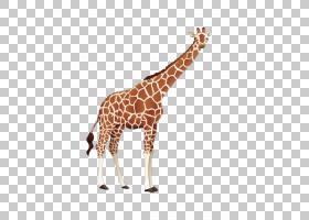 长颈鹿卡通,颈部,野生动物,长颈鹿,颜色,光栅图形,水彩画,卡通,长图片