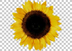 黄花,食物,一年生植物,雏菊家庭,星形目,种子,菜肴,素食,花瓣,花