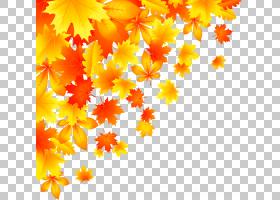 花卉背景,大丽花,花卉设计,线路,橙色,花,黄色,树,花瓣,植物群,颜