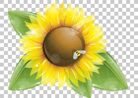绿叶背景,黄色,花瓣,向日葵,关门,植物,向日葵,花,绿色,蜂蜜,雏菊
