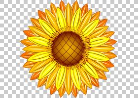 花卉剪贴画背景,圆,线路,橙色,切花,雏菊家庭,花瓣,向日葵,对称性