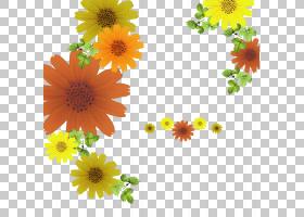 花卉剪贴画背景,大丽花,橙色,黛西,雏菊家庭,插花,非洲菊,花盆,花