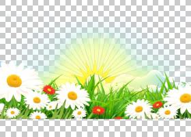 花卉背景,草,牛眼雏菊,黛西,植物群,花卉设计,雏菊家庭,蒲公英,植