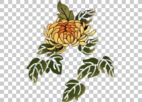 花卉背景,植物,花,植物茎,黄色,植物群,花卉设计,