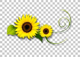 绿花,雏菊家庭,花瓣,向日葵,植物,葵花籽,免费,广告,花,绿色,黄色