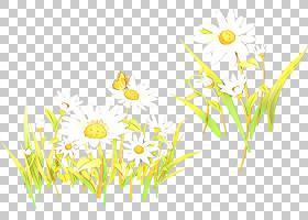 花卉背景,植物茎,梅草,花梗,草族,草,洋甘菊,植物,甘菊,花,黄色,
