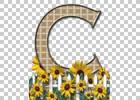 花卉剪贴画背景,拱门,黛西,雏菊家庭,黄色,植物,切花,向日葵,植物