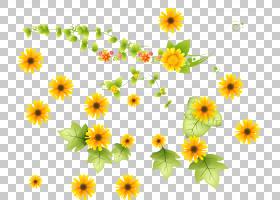 绿草背景,花卉设计,草,一年生植物,大丽花,黛西,雏菊家庭,黄色,花