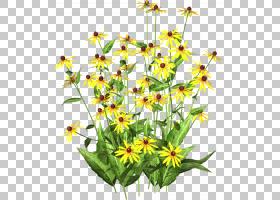 绿草背景,花卉设计,草,野花,植物茎,黛西,雏菊家庭,花卉,花盆,花