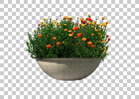 绿草背景,草,一年生植物,橙色,野花,花盆,草药,花,植物,花园,软件