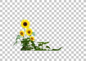 绿草背景,草,插花,雏菊家庭,花卉,黄色,花瓣,向日葵,植物群,植物,