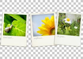 花卉背景框,显示广告,相纸,花,黄色,植物群,广告,免费,花卉设计,