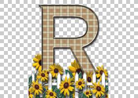 花卉背景框,花卉设计,雏菊家庭,黄色,花瓣,向日葵,植物群,植物,葵