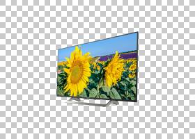 平面背景框,平板显示器,液晶电视,广告,显示广告,技术,植物,相框,