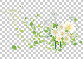 花卉装饰品,花卉,黛西,绿色,植物群,花卉设计,线路,插花,植物,植