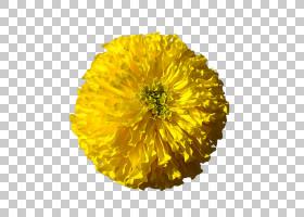 开花,金盏花,花粉,雏菊家庭,万寿菊,像素,一年生植物,直立委陵菜,