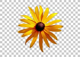 花卉剪贴画背景,橙色,黛西,黄色,向日葵,关门,植物,花瓣,普通向日