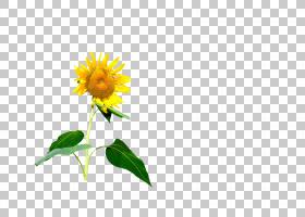 花卉设计,花卉设计,线路,大丽花,雏菊家庭,黛西,花瓣,向日葵,植物