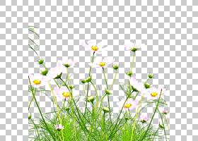 绿草背景,草,黛西,雏菊家庭,黄色,花瓣,春天,草甸,植物群,植物,菊