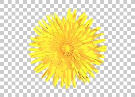 网页设计,向日葵,ColtsFoot,英国万寿菊,植物,花粉,播蓟,花,黄色,