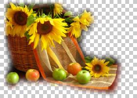 花卉剪贴画背景,素食,花卉,插花,切花,雏菊家庭,水果,花卉设计,黄