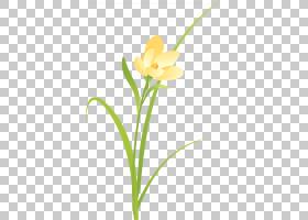 花卉剪贴画背景,线路,植物群,黄色,植物,花瓣,切花,植物茎,花,