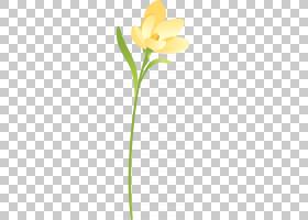 花卉剪贴画背景,线路,植物群,黄色,植物,花瓣,叶,切花,植物茎,花,