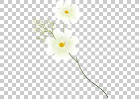 花卉剪贴画背景,线路,植物茎,黛西,雏菊家庭,黄色,切花,花瓣,植物