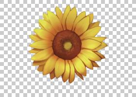 花卡通,非洲菊,雏菊家庭,黄色,花瓣,向日葵,关门,向日葵,葵花籽,