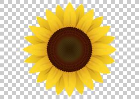 花圈,圆,星形目,雏菊家庭,黄色,花瓣,向日葵,对称性,关门,花粉,向
