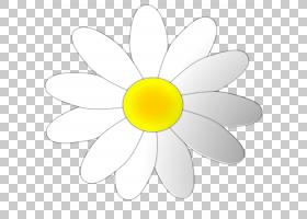 花圈,线路,白色,黛西,花,黄色,圆,对称性,植物群,花瓣,