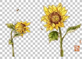 花卉剪贴画背景,花卉,插花,切花,雏菊家庭,花卉设计,黄色,花瓣,向