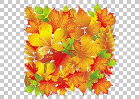 秋花,花卉设计,橙色,水果,插花,黄色,花瓣,花,植物,枫树,枫叶,树,