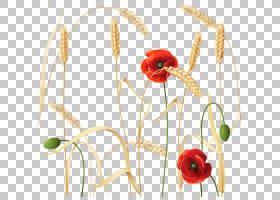 花卉剪贴画背景,花卉设计,植物茎,切花,静物摄影,商品,草族,花瓣,