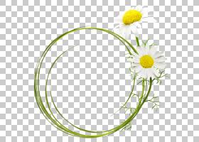 花卉剪贴画背景,花卉设计,草,圆,黛西,黄色,切花,植物群,矩形藻,W