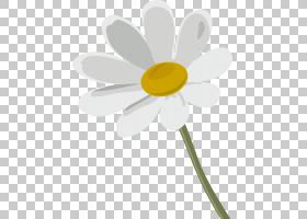 花徽标,植物茎,黛西,黄色,植物群,植物,徽标,DenizBank,二月,广告