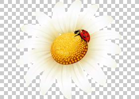 向日葵卡通,橙色,花瓣,关门,昆虫,蜂蜜,花,传粉者,花粉,向日葵,瓢