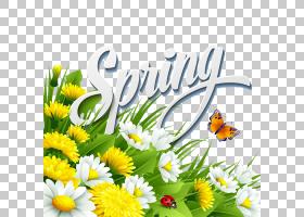 花朵,花卉,草,牛眼雏菊,黛西,传粉者,植物群,花卉设计,蜂蜜,昆虫,