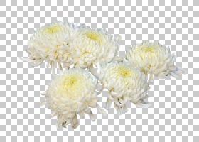 花卉剪贴画背景,花卉,白色,大丽花,插花,雏菊家庭,黄色,花瓣,菊花