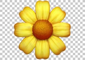 笑脸表情,野花,花粉,洋甘菊,雏菊家庭,特写镜头,植物,花瓣,黄色,